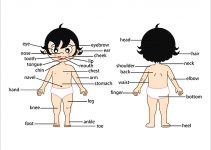 Templates Human Body outline Facts for Kids Sample 1